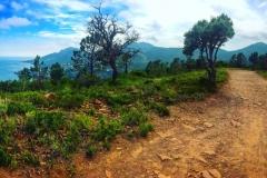 esterel-forest3